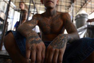 El cártel narcotraficante mexicano de Los Zetas ha establecido un import...
