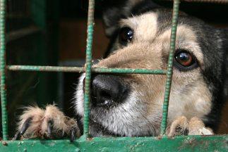 El procurador de Milán detalló que los perros utilizados eran de las raz...