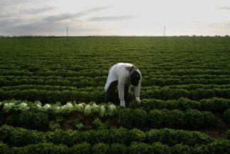 Los agricultores de Georgia temen que la entrada en vigor de la nueva le...