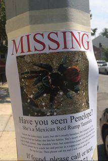 La preocupación fue genuina durante horas en el barrio neoyorquino de Pa...