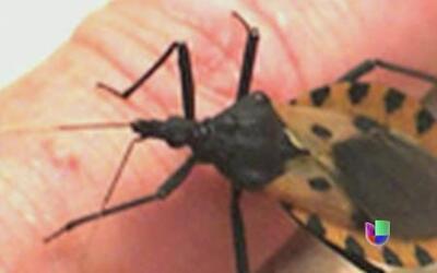 Detectan en Texas insecto que produce mal de chagas