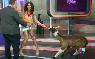 El Gordo y La Flaca hizo reto de desfile con animales al estilo de Nuest...