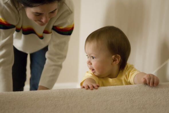 Caminatas iniciales. Si el bebé logra pararse luego del gateo, pu...
