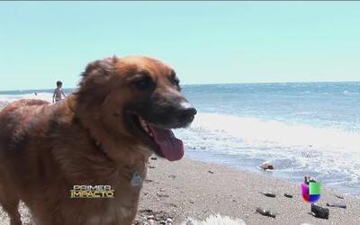 Inauguraron una playa para las mascotas en España