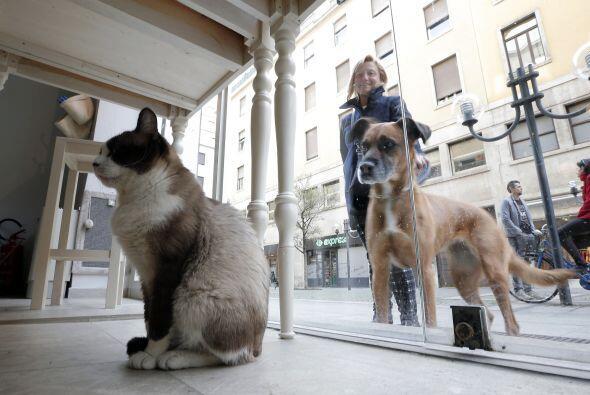 Y luego de ver lo bien que se la pasan los mininos, los perros ya están...