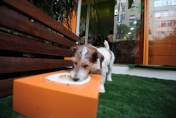 Evita salir a pasear o hacer ejercicio con tu mascota en las horas en la...