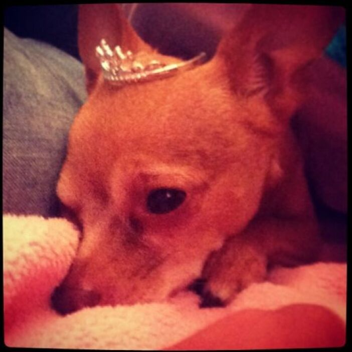 Ana no es la única con corona en casa.