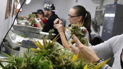 Empleados de un dispensario de marihuana en Denver, Colorado