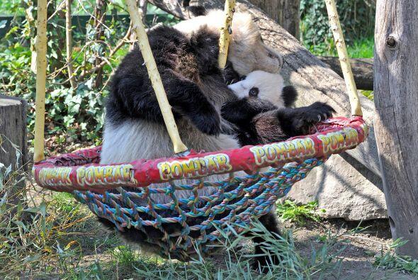A los pocos minutos la mamá panda vio tan contento a su peque&nti...
