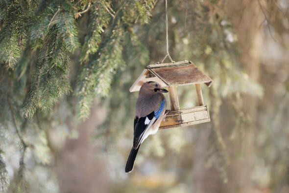 Que no falte la fauna. Esta es una época fuerte de migración de aves, po...