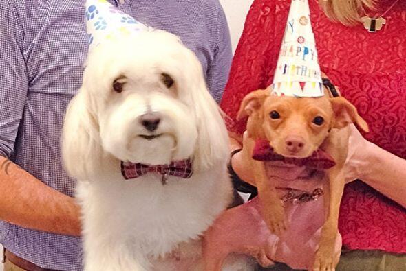 Balki ya conoció a otro perrito famoso, se trata de Tuna que m&aa...