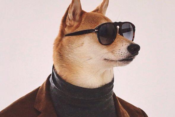 Mensweardog es un rompecorazones muy cosmopolita.