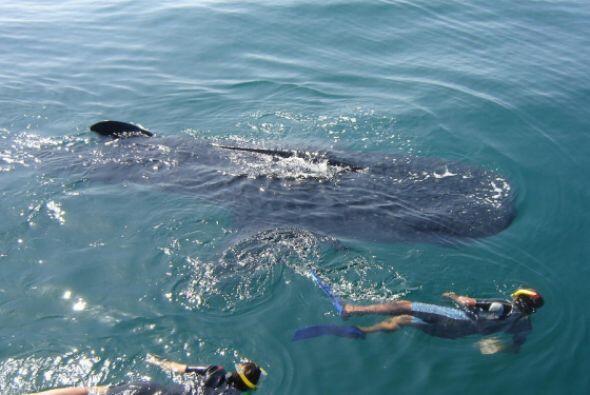 El turismo de masas representa una amenaza directa para el tiburón balle...