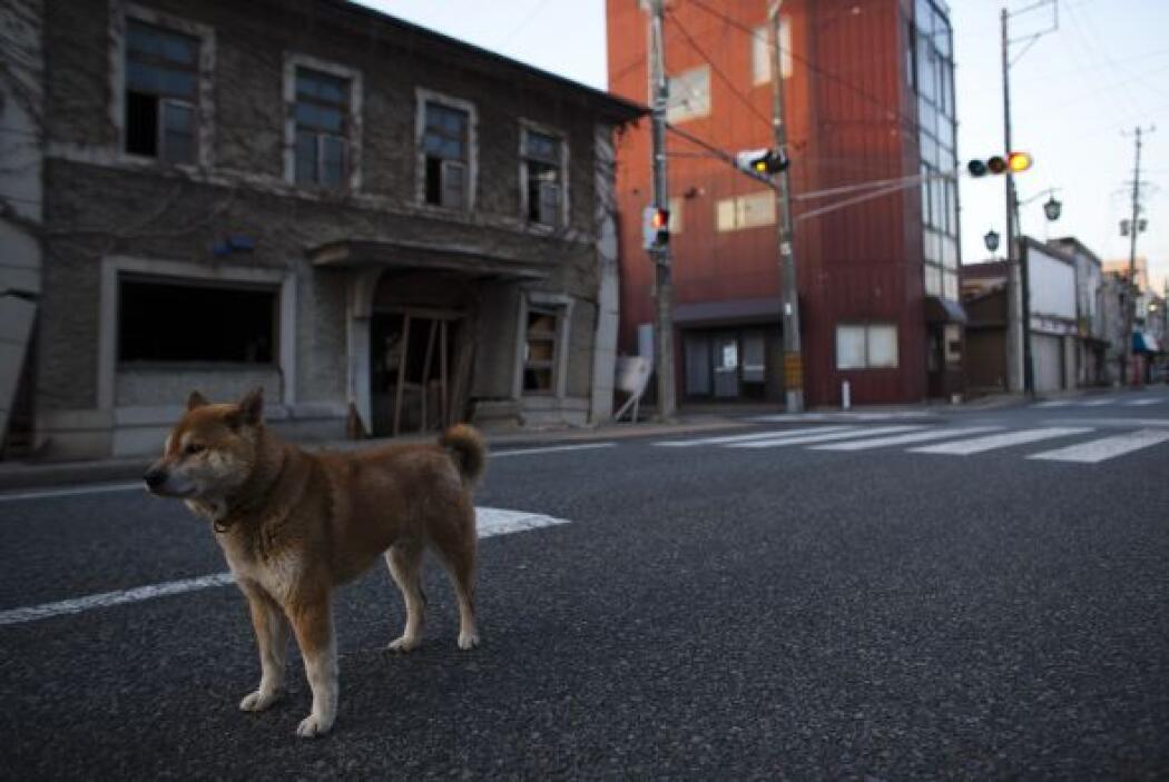 El pueblo de Tomioka, situado a unos 10 kilómetros de la accidentada pla...