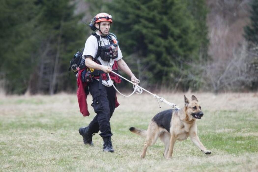 Se han estado utilizando perros, aeronaves y excavadoras para buscar a s...