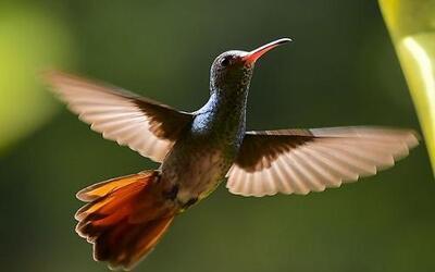 Científicos de la Sociedad Nacional de Audubon lanzaron recientemente un...