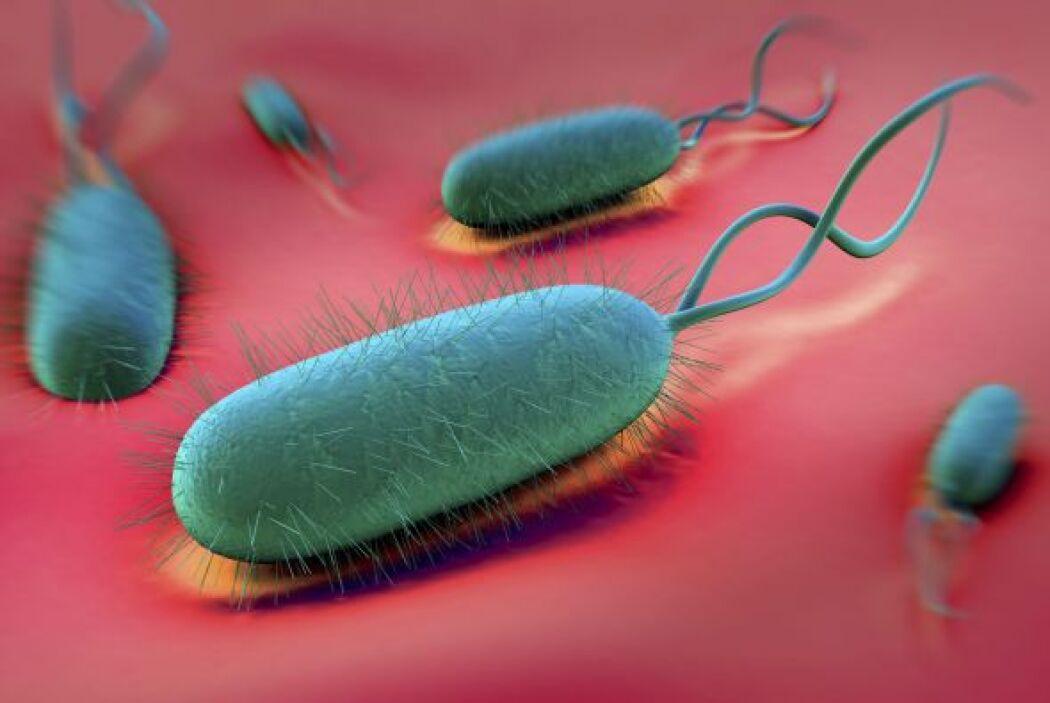 La tesis anterior se apoya en que esas bacterias estimulan la liberación...