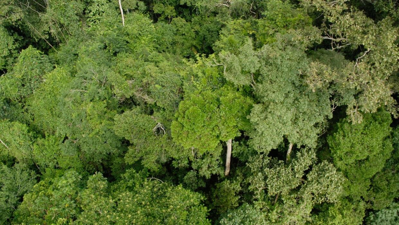 Selva Amazónica 1