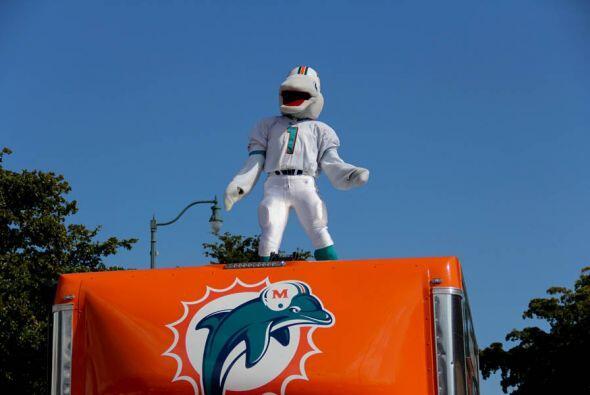 T.D., el mascota de los Miami Dolphins!