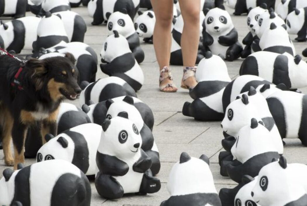 Un perro posa entre dos de los pandas en la plaza de Bremen para la camp...