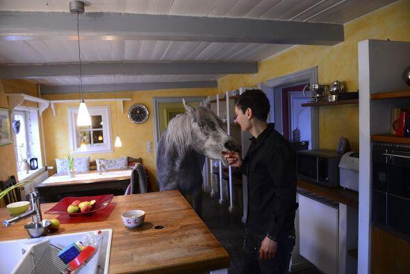 Esta es la mujer que vive con el enorme caballo árabe en su hogar...