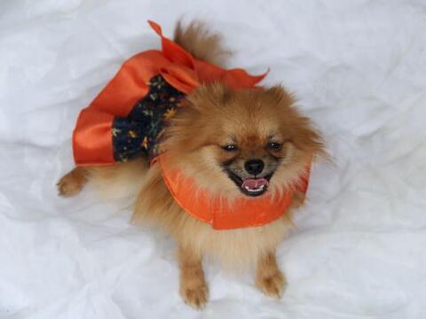 Viste a tu mascota de manera divertida y cómoda para que luzca s&...