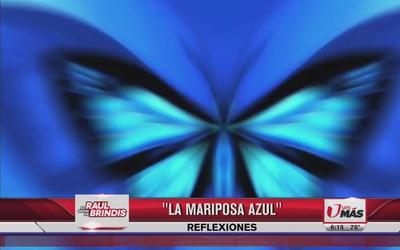Reflexión: La mariposa azul