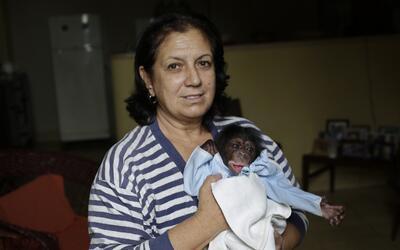 Cuba chimps 1
