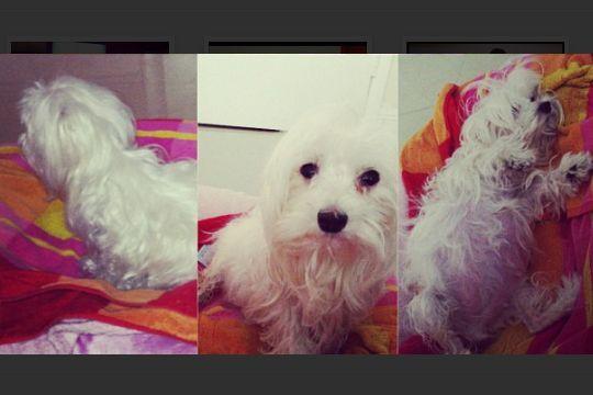 En la casa de Alejandra Espinoza la reina no es ella, sino su perrita So...