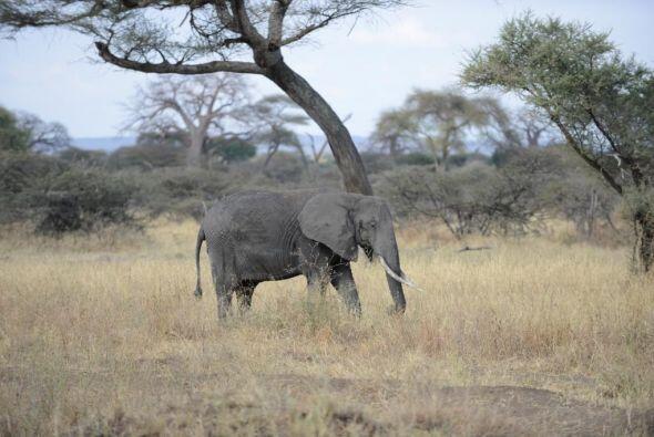 En Tanzania, Lili pudo ver muchísimos elefantes.