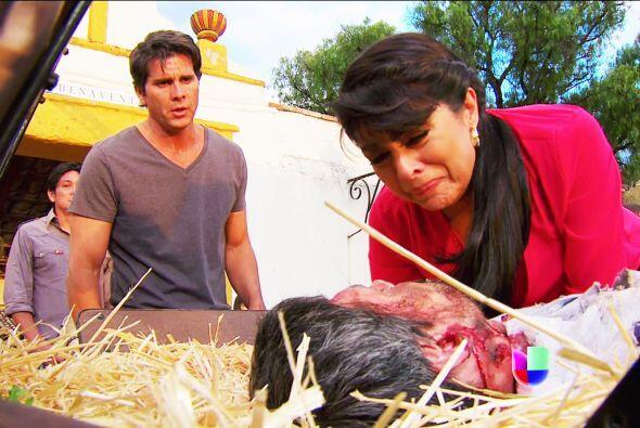 Dale tu calor Cristina, no dejes que te abandone. Dile cuánto lo amas.