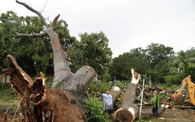Trabajadores cortan las ramas de un árbol que cayó y mat&o...