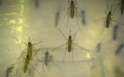 Crece la amenaza del virus del Zika en Florida