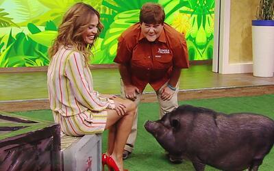 Karla Martínez conoció a la Diva de Jungle Island y más animalitos exóticos