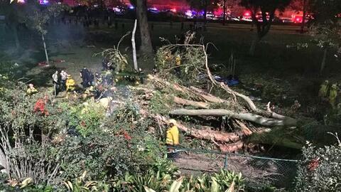 Bomberos cortaron el tronco para rescatar a los heridos.