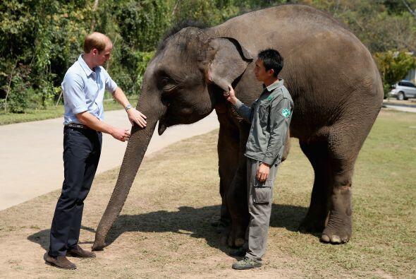 William es ferviente admirador y preservador de la vida salvaje y el med...