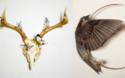 Taxidermia