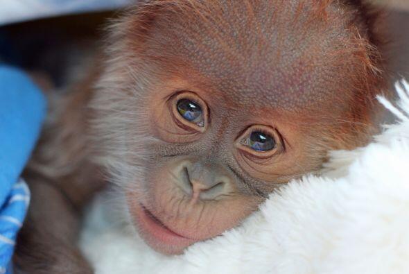 El personal del zoológico hizo todo lo posible por mantener a la madre y...