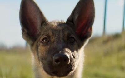 Imagen de 'A dog's purpose'