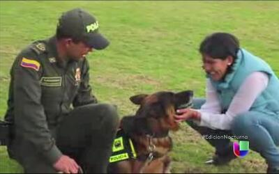 Una psicóloga asegura que habla con los animales