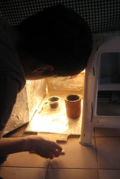 El lirio acuático impide que pase la luz solar al resto del estan...