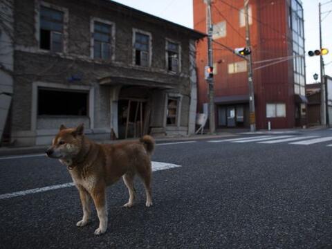 El pueblo de Tomioka, situado a unos 10 kilómetros de la accident...