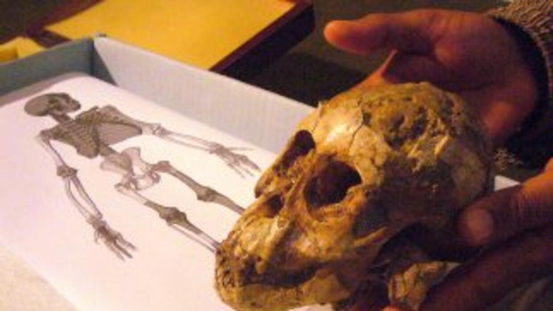 Científicos hallaron vestigios de que el hombre usó herramientas casi un...