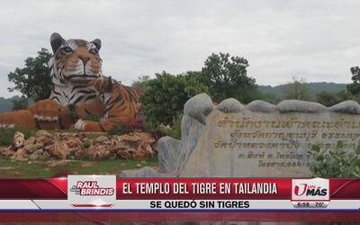 Templo de tigres en Tailandia se queda sin Tigres