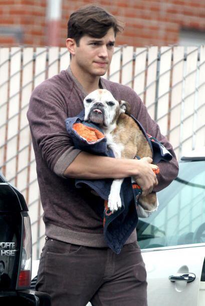 Ashton Kutcher tenía un bebé junto a Mila Kunis: su querido Bulldog, lam...