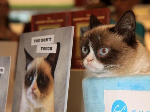 El gato más famoso de las redes sociales hizo su aparición...