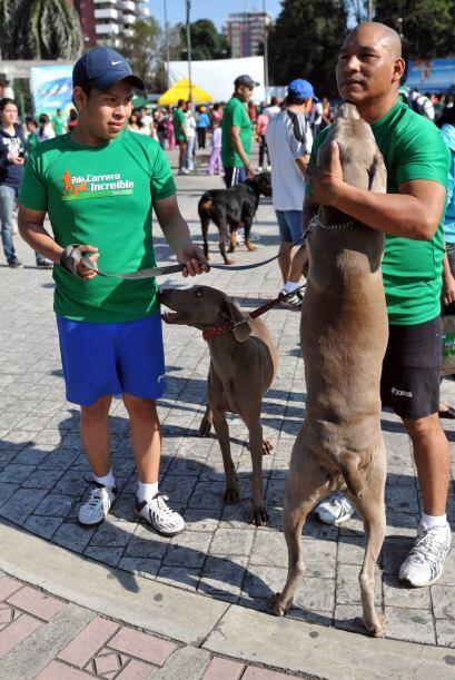 La donación que hicieron los dueños de los canes para que sus mascotas p...