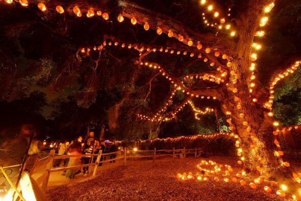 Todo cubierto de luces y calabazas es el ambiente perfecto para empezar...