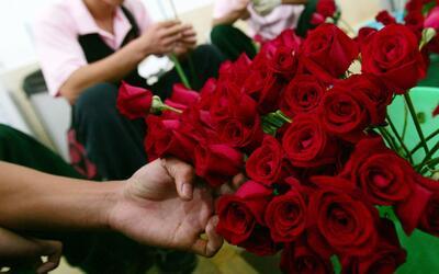 Rosas rojas y rosadas, las más vendidas en el Distrito de las Flores de...