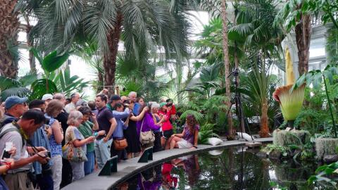 Cientos llegan al encuentro con la 'flor cadáver' en Nueva York